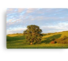 English Countryside In Somerset Canvas Print
