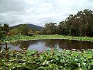 Lotus Mountain View by Lynne Kells (earthangel)