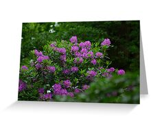 Rhododendrons  #1 Greeting Card