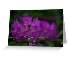 Rhododendron #2 Greeting Card