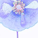 Blue poppy field by Sandra O'Connor
