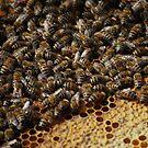 Honey Mill by Rowan  Lewgalon