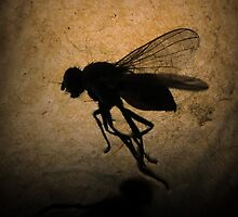 Stuck Fly by Robert Chawner