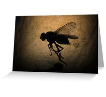 Stuck Fly Greeting Card