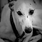 One of the Pointer Sisters by Mark Elshout