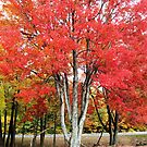 Beautiful tree by Esperanza Gallego