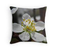 A Single Pear Blossum Throw Pillow