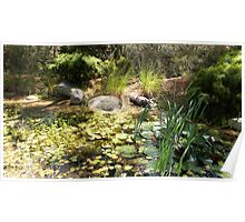 Magical lily pond Poster
