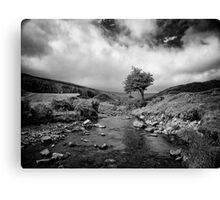 Embracing the coming rain Canvas Print