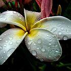 Fresh Rain by Jamie Lee