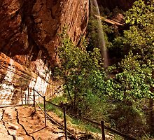 The Weeping Rock AT Zion © by © Hany G. Jadaa © Prince John Photography