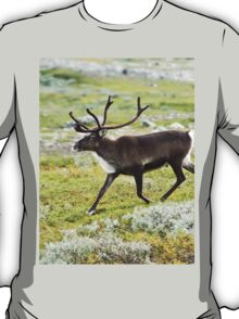 Super Reindeer
