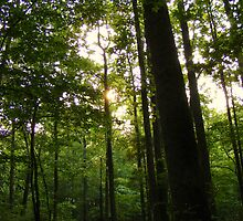 See the Forest for it's Trees by Ms.Serena Boedewig