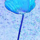 Blue poppy by Sandra O'Connor