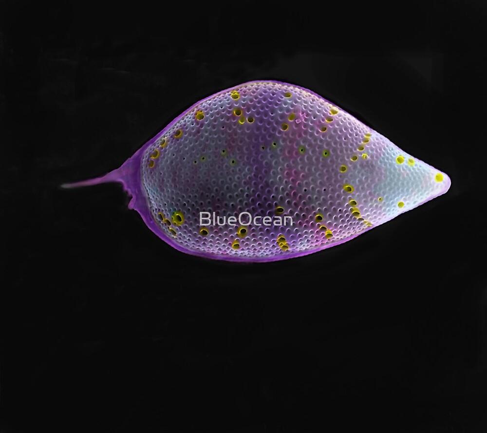 Pogue by BlueOcean