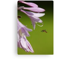 Syrphid Hoverfly Canvas Print