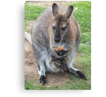 What's That You're Eating Mum? - Wallaby Canvas Print