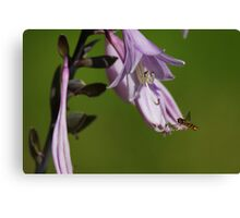 The Hoverfly Canvas Print