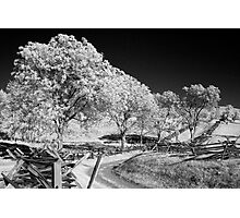 The Sunken Road Photographic Print