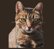 Portrait Of A Cute Tabby Cat With Direct Eye Contact Isolated by taiche