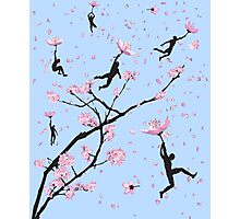 Blossom Flight Photographic Print