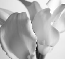 Lillies in a vase by mpphotoonline