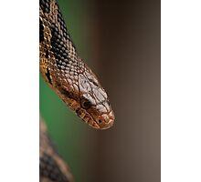 Fox Snake Photographic Print