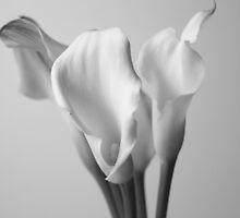 Lilies by mpphotoonline