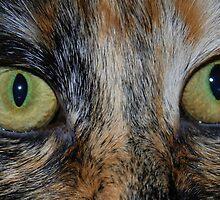 Hunters Eyes by KeepsakesPhotography Michael Rowley