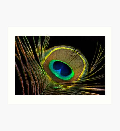 peacock colors Art Print