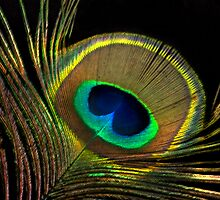 peacock colors by cherylc1
