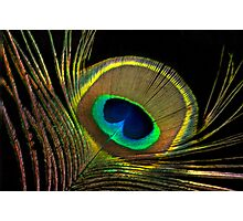 peacock colors Photographic Print