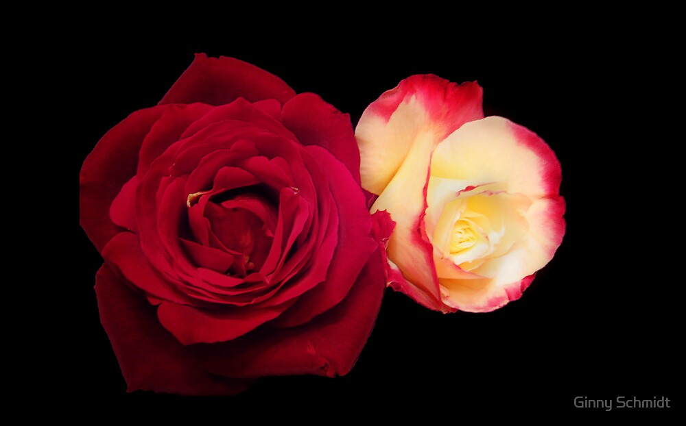 Red Rose and Friend by Ginny Schmidt