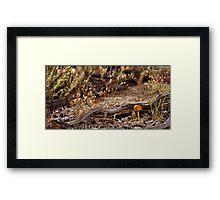 High Desert Shroom Framed Print