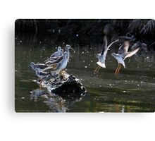 """May We Join You?"" Greater and Lesser Yellowlegs Canvas Print"