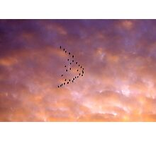 Geese in formation, sunset, Eugene, Oregon Photographic Print
