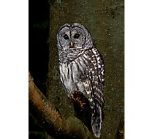 Barred Owl - Spirit Park, BC Photographic Print
