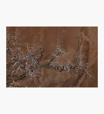 Canyon Tree - Escalante Grand Staircase National Monument Photographic Print