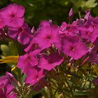 Garden Flowers - Colleen's house by David Galson