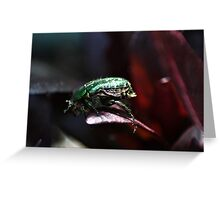 The rare rose chafer Greeting Card