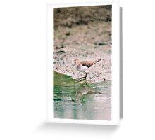 Sandpiper Greeting Card