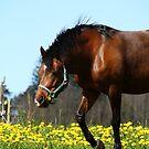 24.5.2015: Pony on Pasture II by Petri Volanen