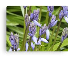 Why So Blue Belle? Bluebell Canvas Print