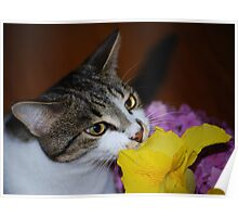 Kaizoe and the flowers Poster