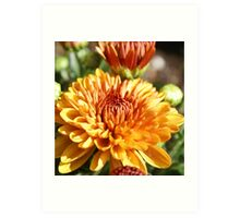 Colors Of Fall; Mums in my back yard All Rights Reserved Lei Hedger 2009 Art Print