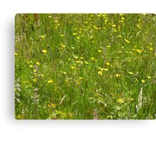 Wild Spring Meadow Fun Canvas Print