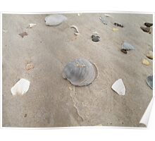 Shells on the beach. Poster