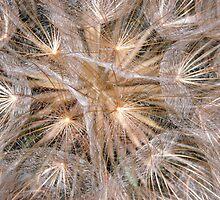 Dandelion Seeds Macro by Detlef Becher