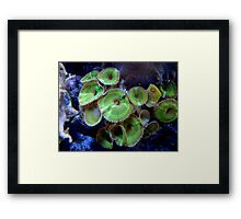 Water Flora     ^ Framed Print