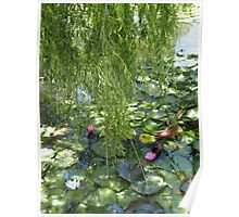 Ode to Monet's garden- Blue Lotus Water lily farm, Victoria  Poster